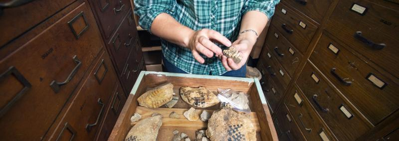 In the foreground museum collections manager, Amy Moe-Hoffman, shows some Ammonite fossils, collection drawers in the background